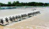 Phấn đấu đạt sản lượng thủy sản trên 60.000 tấn trong năm 2021