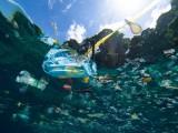 Khởi động Kế hoạch hành động ASEAN về chống rác thải nhựa đại dương