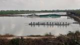 Mộc Hóa xử phạt 44 trường hợp nuôi tôm thẻ chân trắng trong vùng nước ngọt