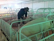 African swine fever actively prevented and controlled