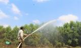 Tăng cường bảo vệ và phòng, chống cháy rừng
