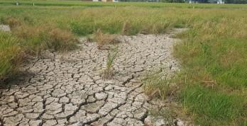 Long An kiến nghị đầu tư làm hồ chứa nước ngọt 140ha ứng phó hạn, mặn
