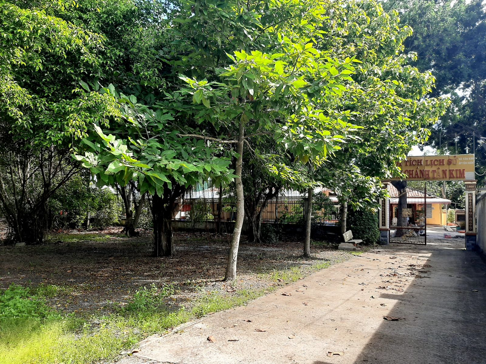 Đường vào đình Chánh Tân Kim rợp mát bóng cây