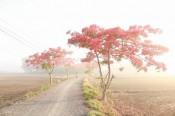 Yên bình, mộc mạc nơi quê hương Cần Đước