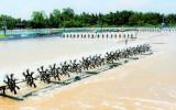 Tăng cường các biện pháp phòng, chống dịch bệnh thủy sản