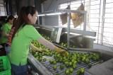 Nhiều nông sản rớt giá, khó tiêu thụ