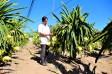 Bảo vệ vườn cây ăn trái thời điểm giao mùa