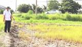 Chủ tịch UBND huyện Cần Đước khảo sát 160ha lúa chết tại xã Long Hựu Đông