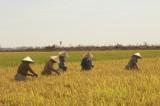 Liên kết sản xuất, tạo đầu ra cho nông sản