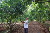 Crops restructured to suit local advantages