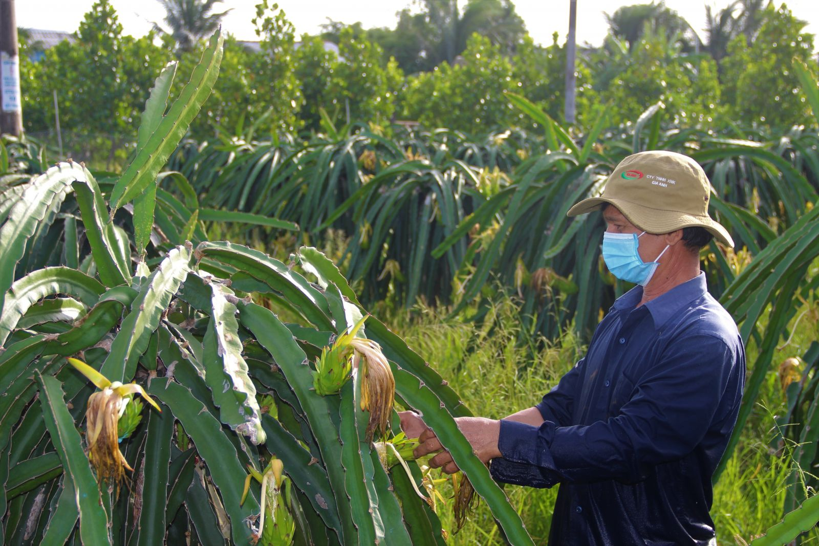 Farmers maintain production while preventing and fighting epidemics