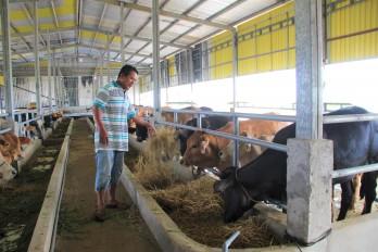 Ngăn dịch bệnh viêm da nổi cục trên trâu, bò phát sinh và lây lan