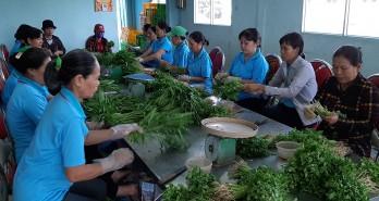 Tiếp tục xây dựng chuỗi cung ứng sản phẩm nông sản sạch