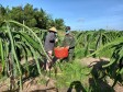 Bộ đội giúp dân thu hoạch nông sản