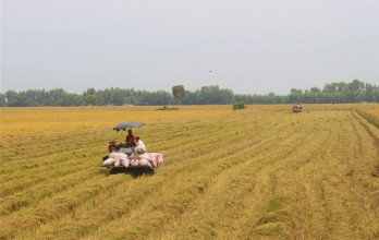 Removing difficulties in rice consumption