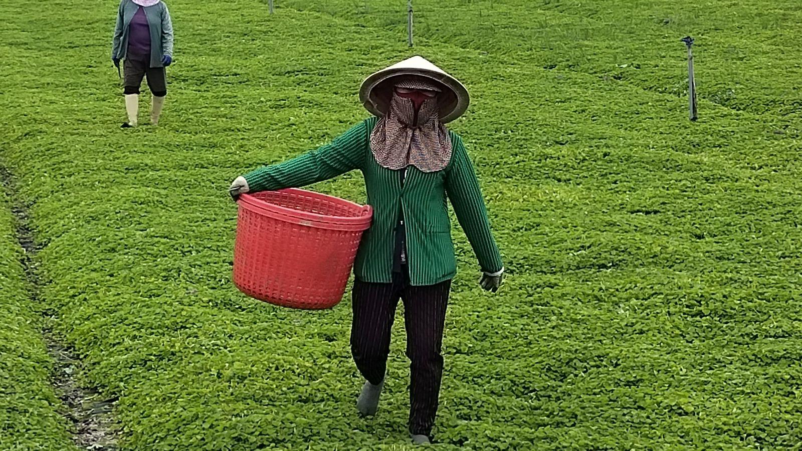 https://baolongan.vn/cac-dia-phuong-vung-dong-thap-muoi-s-n-sang-ung-pho-thien-tai-a121361.html