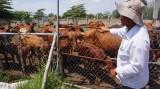 Sẽ di dời cơ sở chăn nuôi ra khỏi các đô thị lớn