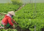 Chương trình Mỗi xã một sản phẩm: Nâng tầm nông sản địa phương