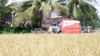 Mộc Hóa tạo điều kiện thu hoạch và tiêu thụ lúa Hè Thu