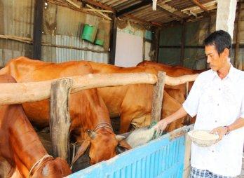 Cần Đước phát hiện bệnh viêm da nổi cục trên bò