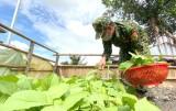 Sẻ chia từ vườn rau bộ đội