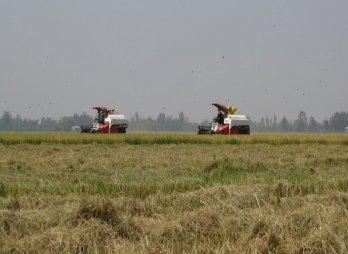 Giá bán nhiều mặt hàng nông sản xuống thấp