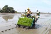 Giá phân bón tăng, nông dân gặp khó