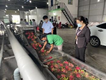 Long An: National Industrial Promotion Program supports 300 million VND for enterprises processing dragon fruit