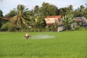 Tập trung chăm sóc lúa Thu Đông