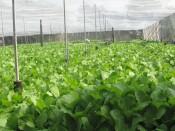 Hỗ trợ nông sản lên sàn thương mại điện tử