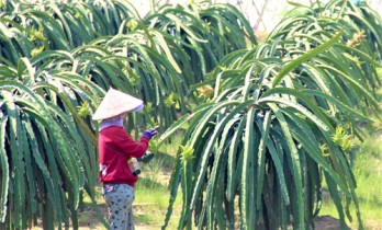 Long An Agriculture Sector: Efforts to complete targets and tasks in 2021