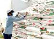 Để nông dân an tâm tái sản xuất