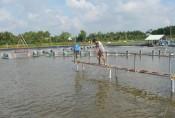 Cần Giuộc: Tập trung hỗ trợ người nuôi tôm phục hồi sản xuất sau dịch