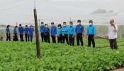Hiệu quả từ việc ứng dụng công nghệ cao vào sản xuất nông nghiệp